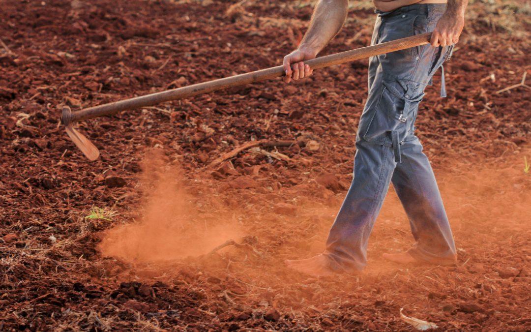 Au Nicaragua, Financiera FDL contribue à la diffusion de l'agroécologie