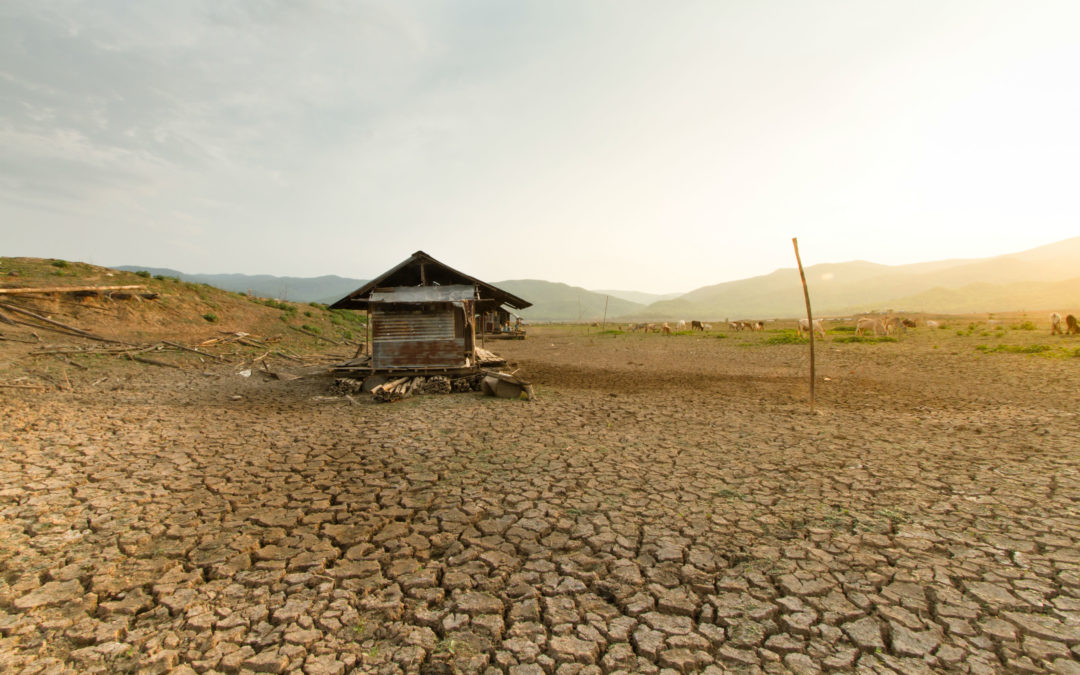(Micro)finance for Resilience: Helping Clients Adapt to Climate Change